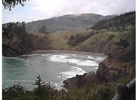 Beaches-CoveSurfTrees