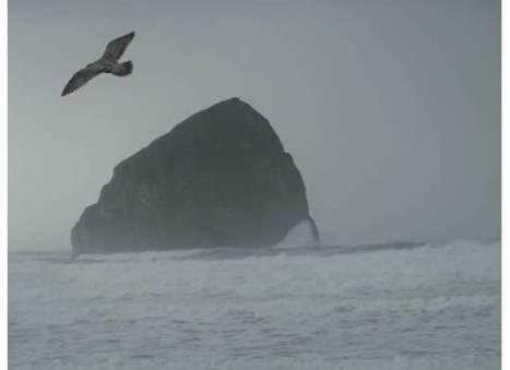 Beaches-SeagullRockSurf