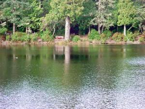 LakeMarie-Duck-Respite