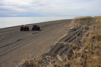 ATVs are excellent tools for getting around. It's best to use them only on beaches where there is no permanent damage and tracks are washed away by waves. Tundra plants cannot bounce back as easily as gravel. 2 ATVs on a beach