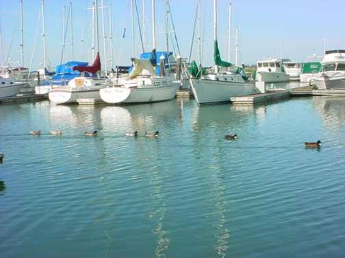 BoatDucksWindyBay