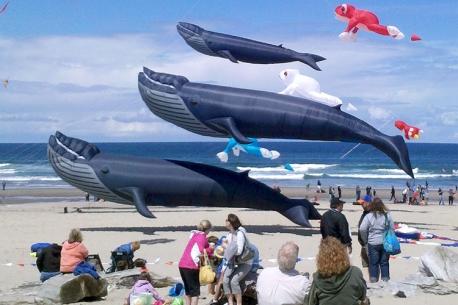 WhalesKite