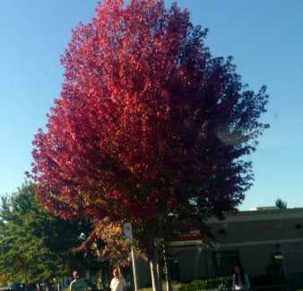 Oregon-FallColorsBend