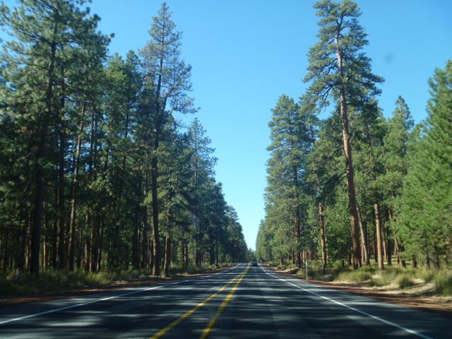 Oregon-IntoTheForest
