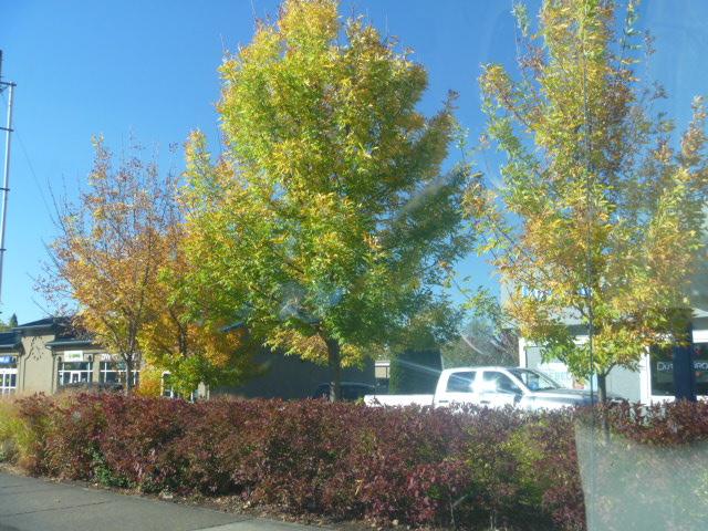 Oregon-MoreBendFallColors