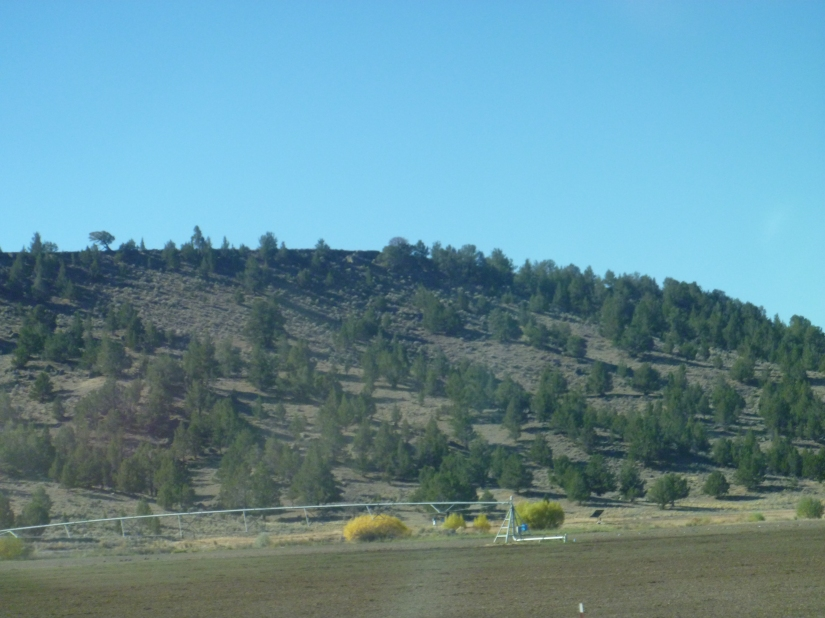 Oregon-PinesOnTheDesert