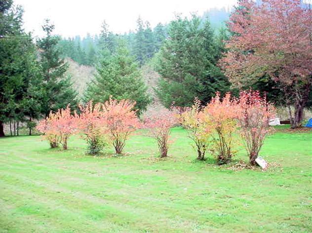 Oregon-URHFallBlueberries