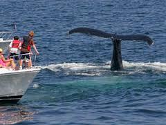 WhaleWatchingInBoat