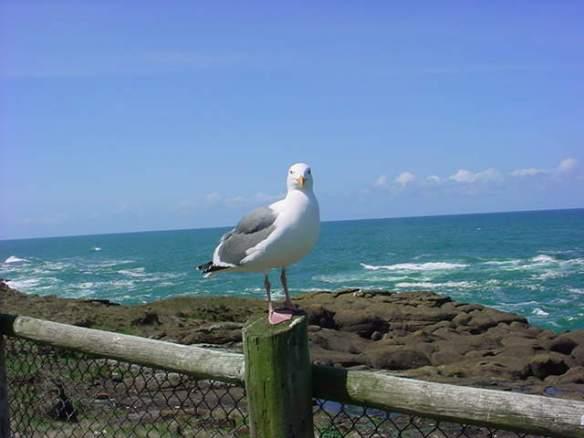SeagullOnPostOcean