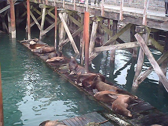 Sealions-NewportDocks-2