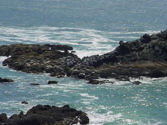 SealsOnRocksAtSealRockOcean