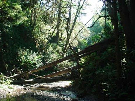 redwoods-8-natbridgeprairiecreek