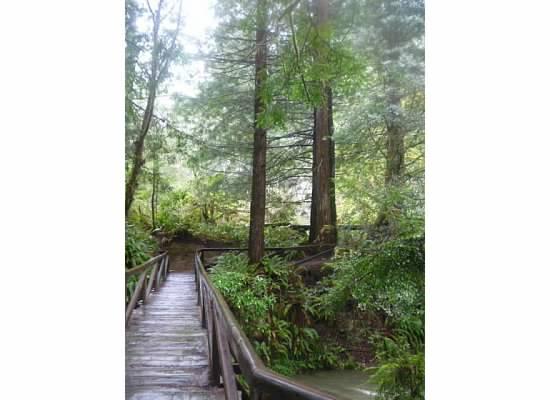 redwoodsbridgeoverprairiecreek